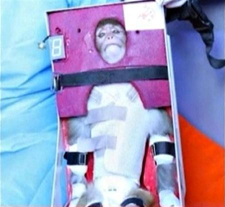 1月28日、イラン国防軍需省は、サルを乗せたロケットの打ち上げに成功し、宇宙空間に到達したと発表した。写真はテレビ映像から(2013年 ロイター/Press TV via Reuters TV)