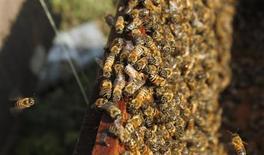 La Comisión Europea dijo el jueves que iba a proponer a los países miembros de la UE restringir los pesticidas cuyo uso se ha relacionado con un declive de las abejas. En la imagen de archivo, abejas en una granja en Moc Chau, al oeste de Hanoi, el 19 de noviembre de 2012. REUTERS/Kham