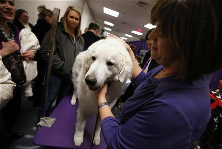Obscure breeds truly one of a kind at New York dog show