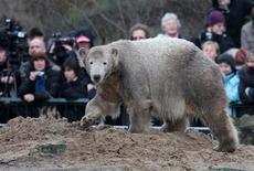 Imagen de archivo del oso polar Knut durante la celebración de su segundo cumpleaños en el zoológico de Berlín, dic 5 2008. Knut, el oso polar criado por humanos que capturó los corazones de los alemanes antes de su temprana muerte en 2011, volvió ante su fiel público berlinés el viernes con la presentación de un modelo a tamaño natural que lleva la piel real del animal. REUTERS/Johannes Eisele/File SOLAMENTE PARA SU USO EDITORIAL