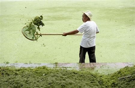 A cleaner removes algae from the algae-filled Yueya Lake in Nanjing, Jiangsu province June 8, 2012. REUTERS/Sean Yong (CHINA - Tags: SOCIETY ENVIRONMENT) - RTR339X2