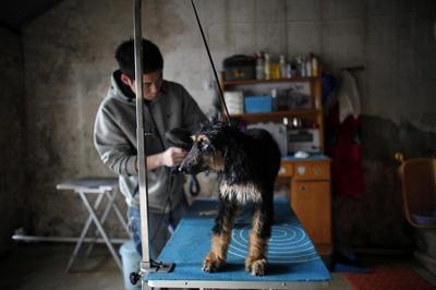 Shanghai's Dog Show