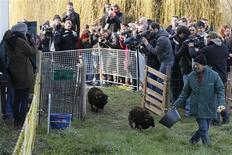 Arrivée de moutons sur un terrain en friche de 2.000 mètres carrés appartenant aux Archives de Paris dans le XIXe arrondissement de la capitale. Afin de limiter l'usage d'engins mécaniques et de désherbants, Paris va confier pour la première fois l'entretien de ses pelouses à quatre moutons. /Photo prise le 3 avril 2013/REUTERS/Charles Platiau