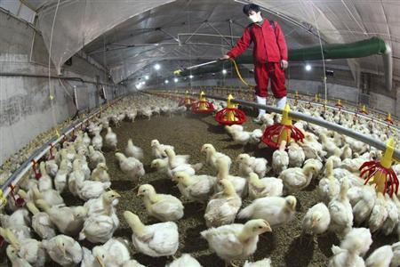 An employee sprays to sterilize a poultry farm in Hemen township, Jiangsu province, April 8, 2013. Picture taken April 8, 2013. REUTERS/Stringer