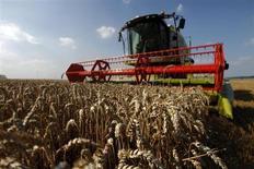 Un céréalier du Kansas a porté plainte lundi contre Monsanto, accusant le géant américain de l'agrochimie de grave négligence après la découverte d'une souche non homologuée de blé génétiquement modifié dans une ferme de l'Oregon. /Photo d'archives/REUTERS/Pascal Rossignol