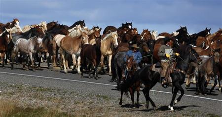 Wranglers lead a herd of wild horses during Montana Horses' annual horse drive outside Three Forks, Montana, May 6, 2012. REUTERS/Jim Urquhart