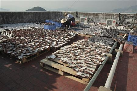 Workers lay out pieces of shark fin to dry on a rooftop of a factory building in Hong Kong January 2, 2013. REUTERS/Bobby Yip