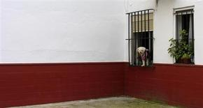 A dog leans out of a window in the Andalusian capital of Seville, southern Spain April 1, 2013. REUTERS/Marcelo del Pozo