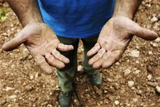 Farmer Ricardo Boix shows his hands as he works on a vineyard of his property in Cheste near Valencia, May 31, 2013. REUTERS/Heino Kalis