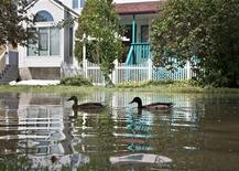 A pair of ducks swim on a flooded street in Calgary, Alberta June 23, 2013. REUTERS/Andy Clark