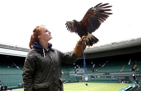 Rufus the Hawk clears Wimbledon as record crowds queue up