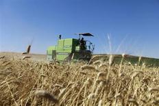 La Chine va se tourner vers les marchés mondiaux pour assurer son approvisionnement en blé cette année, les pluies des dernières semaines ayant endommagé quelque 10 millions de tonnes de céréales, soit plus de 8% de la production annuelle. L'augmentation de ses importations pourrait favoriser la hausse des cours mondiaux et exacerber des tensions déjà alimentées par un climat défavorable aux Etats-Unis, en Russie et en Ukraine. /Photo prise le 14 juin 2013/REUTERS/Anis Mili