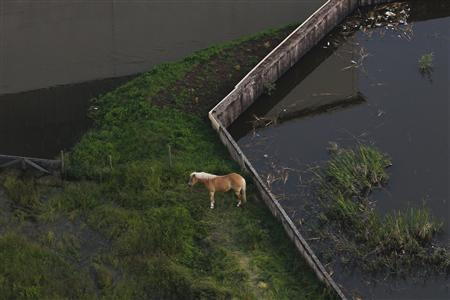 File picture shows a horse on a patch of land surrounded by the swollen Elbe river in the village of Fischbeck in the federal state of Saxony Anhalt after it was flooded by the Elbe river June 12, 2013. REUTERS/Thomas Peter/Files