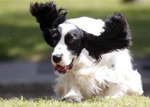 Une compagnie s'apprête à lancer sur l'ensemble des Etats-Unis une chaîne de télévision composée de programmes destinés uniquement aux chiens. /Photo d'archives/REUTERS/Laszlo Balogh