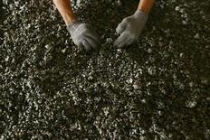 Никелевая руда на ферроникелевом комбинате компании Aneka Tambang Tbk в Индонезии 30 марта 2011 года. Цены на никель могут восстановиться в следующем году, когда Индонезия введет запрет на экспорт необработанной руды, сказали руководители Норильского никеля, крупнейшего в мире производителя металла. REUTERS/Yusuf Ahmad