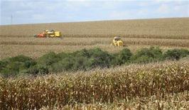 Fazendeiros colhem milho em Xanxeré, Santa Catarina. A safra total de milho do Brasil em 2012/13 deve superar 80 milhões de toneladas pela primeira vez na história, estimou nesta quinta-feira a Companhia Nacional de Abastecimento (Conab). 25/02/2008 REUTERS/Inaê Riveras