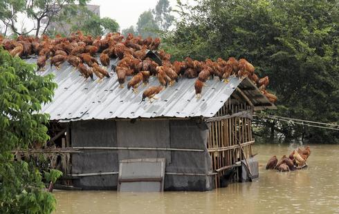 Animals escaping floods