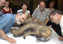 Ученые изучают ископаемого мамонтёнка в Салехарде 2 июля 2007 года. Российские палеонтологи, физики-ядерщики и другие научные работники угрожают выйти на улицы с акциями протеста против планов Кремля лишить Академию наук самостоятельности. REUTERS/Sergei Cherkashin