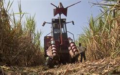 Trabalhador ao lado de uma colheitadeira mecânica em uma plantação de cana-de-açúcar, perto do vilarejo de Umraj, cerca de 285 km ao sul de Mumbai, na Índia. Uma disputa sobre os preços de cana-de-açúcar entre os produtores indianos e as usinas pode reduzir as exportações de açúcar do segundo maior produtor mundial, atrasar a moagem da nova temporada e até mesmo desencadear falências. 5/12/2011. REUTERS/Vivek Prakash
