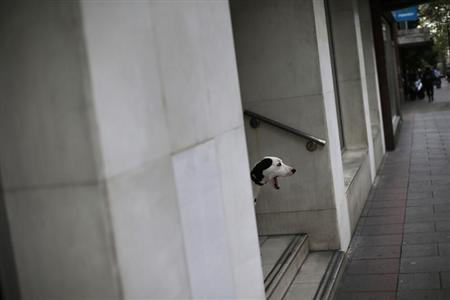 A dog yawns as it looks at people passing by at a street in central Madrid April 30, 2013. REUTERS/Susana Vera