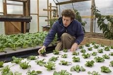 Chester County Food Bank agricultural director Bill Shick examines young lettuce plants growing in a hydroponic bed in a greenhouse, where the program grows seedlings, in suburban Philadelphia, Pennsylvania November 21, 2013. REUTERS/Tom Mihalek