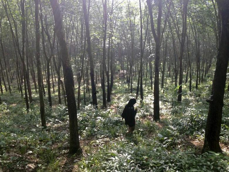 A guide walks through the woods outside a suspected human trafficking camp near Baan Klong Tor in southern Thailand October 30, 2013. REUTERS/Jason Szep/Files