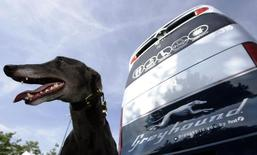 A greyhound sits beside a Greyhound bus at the launch of FirstGroup's new Greyhound UK service in London August 19, 2009. REUTERS/Luke MacGregor