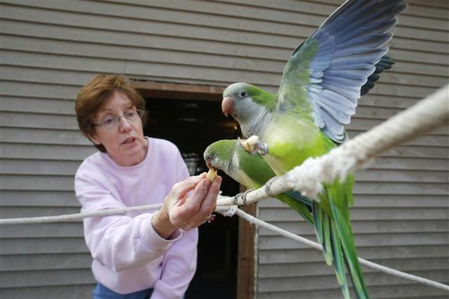 U S  parrot rescuers struggle to keep up with unwanted birds