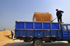 Fazendeiros carregam grãos de milho em um caminhão em Zouping, na província de Shandong. A China rejeitou um carregamento de cerca de 2 mil toneladas de grãos secos de destilaria (DDGs, na sigla em inglês), um subproduto do milho, e mais rejeições são esperadas com Pequim impondo regras rígidas sobre variedades geneticamente modificadas não aprovadas no país, disseram operadores nesta quinta-feira. 26/03/2013 REUTERS/Stringer