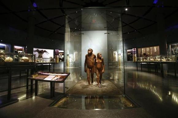 Digital Museum Of Natural History