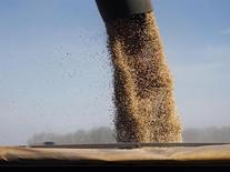 Granos de soja se cargan en un camión en un campo en la ciudad de Chacabuco. 24 de abril, 2013. La sequía de tres semanas que golpeó al cinturón agrícola de Argentina en diciembre está marchitando gradualmente las previsiones de producción de maíz del país austral, uno de los mayores exportadores agrícolas del mundo, lo que probablemente impulse los precios internacionales de los alimentos. REUTERS/Enrique Marcarian