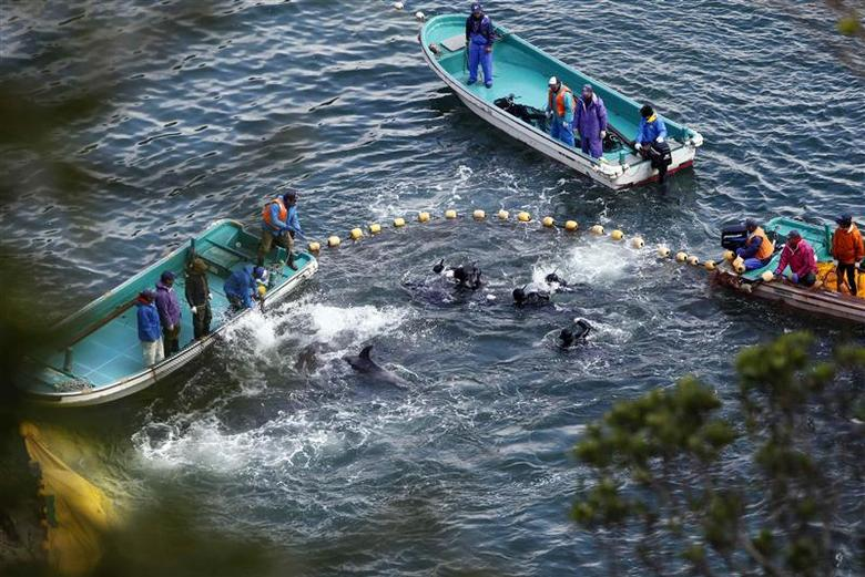 Fishermen in wetsuits hunt dolphins at a cove in Taiji, western Japan, January 20, 2014. REUTERS/Adrian Mylne