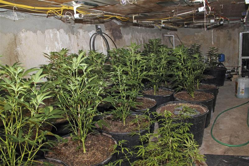 Florida police find marijuana plants growing in empty swimming pool
