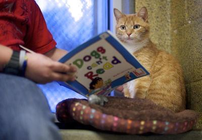 Kids reading to cats