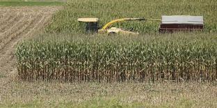 Un maizal en Coatsville, EEUU, ago 30 2013. Los agricultores estadounidenses sembrarán más soja, algodón y arroz en el 2014/15, mayormente a expensas del maíz y trigo, estimó el jueves el Departamento de Agricultora. REUTERS/Gary Cameron