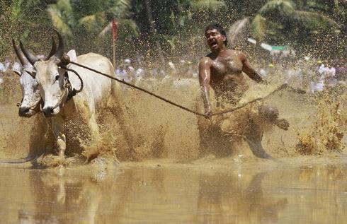 Racing Bulls