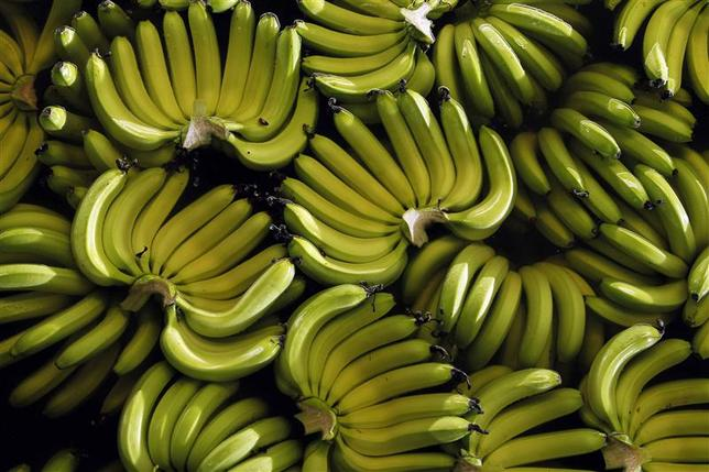 Bananas are seen on a plantation outside Guayaquil, Ecuador, in this file photo taken February 23, 2012. REUTERS/Guillermo Granja/Files