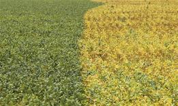 Un sojal en Primavera do Leste, Brasil, feb 7 2013. El Departamento de Agricultura de Estados Unidos (USDA) redujo su previsión para la cosecha brasileña de soja a 88,5 millones de toneladas desde las 90 millones de toneladas de su pronóstico de febrero, pero aún sobre las 82 millones de toneladas de la cosecha anterior. REUTERS/Paulo Whitaker