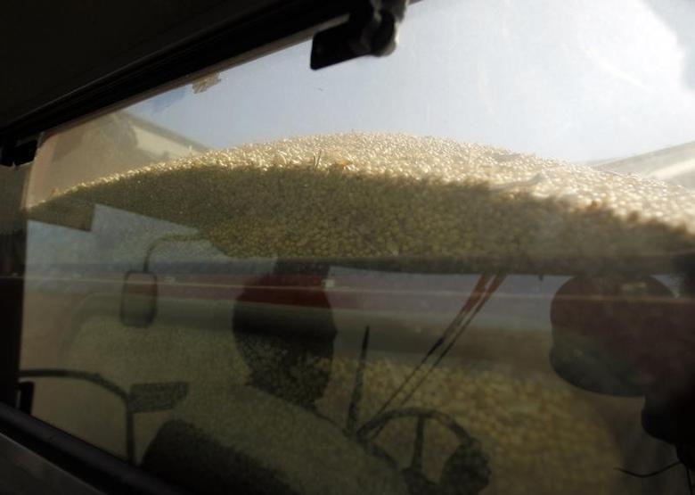 Soybeans are seen at the back of a harvester at a field in the city of Chacabuco April 24, 2013. REUTERS/Enrique Marcarian