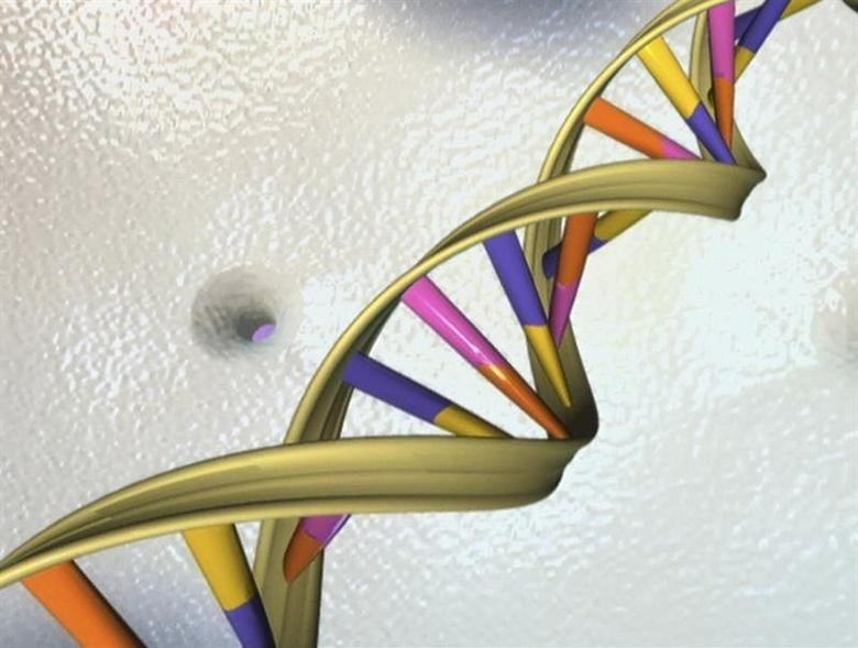 A DNA double helix is seen in an undated artist's illustration released by the National Human Genome Research Institute to Reuters on May 15, 2012. REUTERS/National Human Genome Research Institute