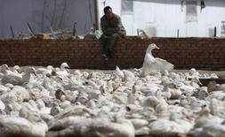 A worker watches over a group of ducks at a duck farm for the production of foie gras, meaning 'fatty liver' in French, in the town of Yanqing, located 70 kilometres north-west of Beijing April 14, 2010. REUTERS/David Gray
