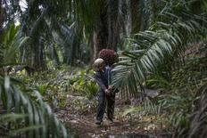 Indonesian worker Abdul Rahim Gani, 32, carries oil palm fruits at Felda Bukit Cerakah in district of Klang outside Kuala Lumpur April 16, 2014. REUTERS/Samsul Said