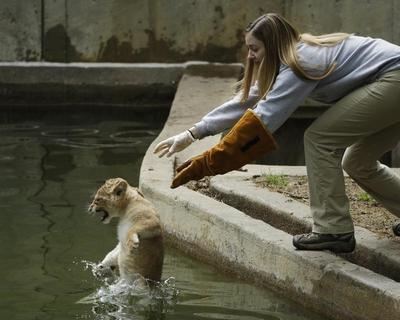 Lion cubs get dunked