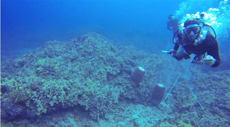 Hawaii scuba diver says breathing apparatus ripped off...