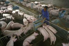 En la imagen de archivo, una trabajadora alimenta a cerdos en un criadero en las afueras de Suining, provincia de Sichuan el  27 abril de 2009. México reportó brotes del mortal virus de la diarrea epidémica porcina (PED) en 17 estados de 19 en los que se realizaron pruebas, informó el jueves la Organización Mundial de Sanidad Animal (OIE). REUTERS/Stringer