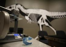 A 3D plastic scan of the skull of a sixty-six million year old Tyrannosaurus Rex skeleton is seen at the Smithsonian Museum of Natural History in Washington April 15, 2014. REUTERS/Gary Cameron