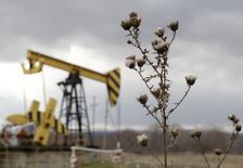 Plantas fotografiadas junto a un campo petrolero de Rosneft en la región de Krasnodar. Imagen de archivo, 21 diciembre, 2014. Las exportaciones de petróleo de Rusia caerían un 4,3 por ciento este año, dijo el ministro de Energía ruso, Alexander Novak, al citar datos preliminares el martes. REUTERS/Eduard Korniyenko
