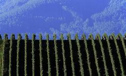 Les exportations de vin australien ont progressé de 1,9% en 2014 aussi bien en volume, à 700 millions de litres, qu'en valeur, à 1,82 milliard de dollars australiens (1,29 milliard d'euros), avec une forte demande pour les vins haut de gamme en Amérique du Nord, en Europe et en Asie. /Photo d'archives/REUTERS/Matt Turner