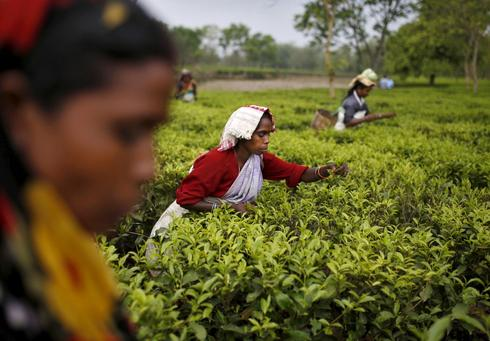 India's endangered Tea Tribes