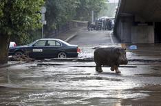 Une trentaine d'animaux sauvages se sont échappés dimanche du zoo de Tbilissi et ont erré dans les rues de la capitale géorgienne à la suite de violentes inondations qui ont fait au moins 12 morts. /Photo prise le 14 juin 2015/REUTERS/Beso Gulashvili